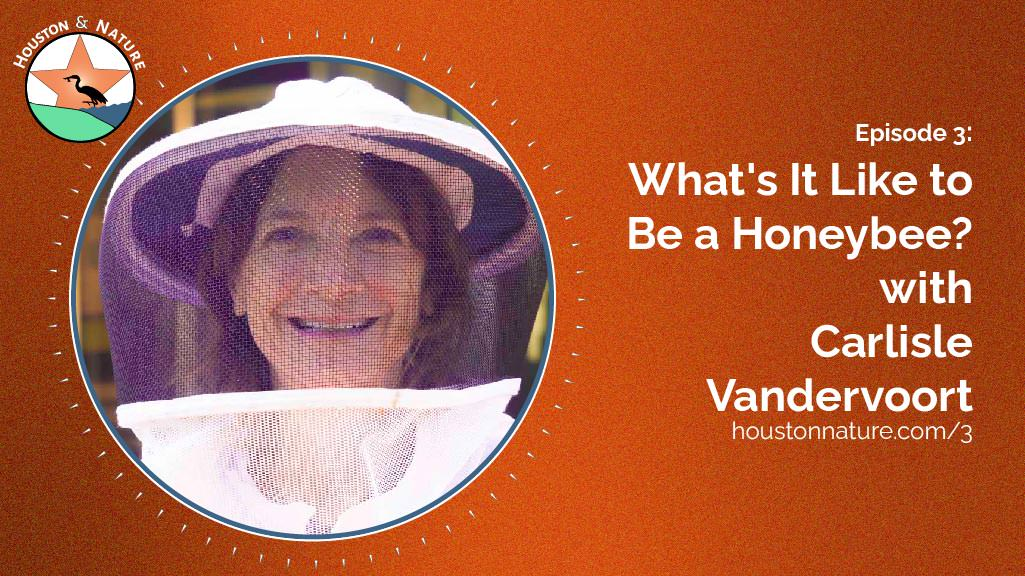 Honeybee Episode with Carlisle Vandervoort